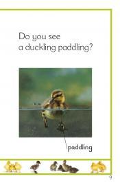Duck Pond Dip_11.jpg