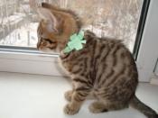Котёнок в ожерелье с листком клевера